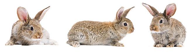 kaninchenstall_draußen