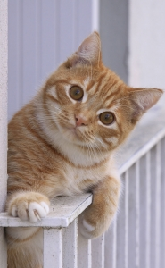 Katzenschutznetz_balkon